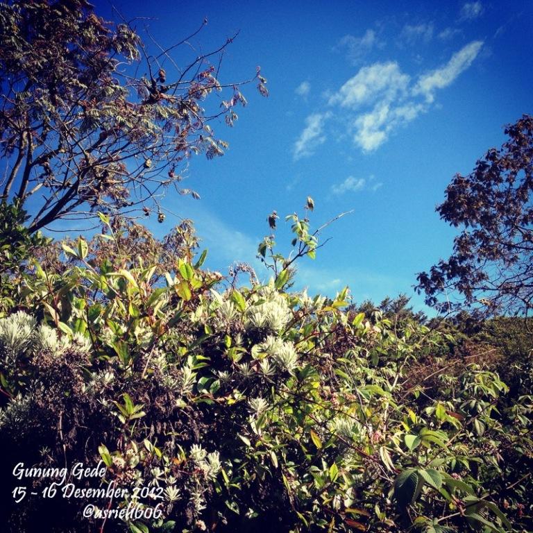 Gunung Gede15-16 Desember 2012                @asriel1606