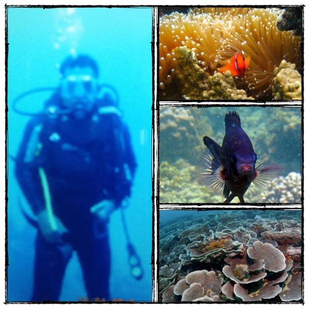 belajar diving