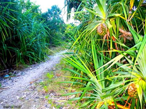 Trekking Pathway