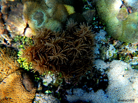 soft coral in the Lagoon Bajo