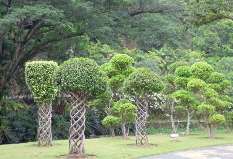 lake garden2